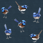 Designer Collection BLUE WREN