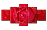 Red Rose  - 5 piece Canvas