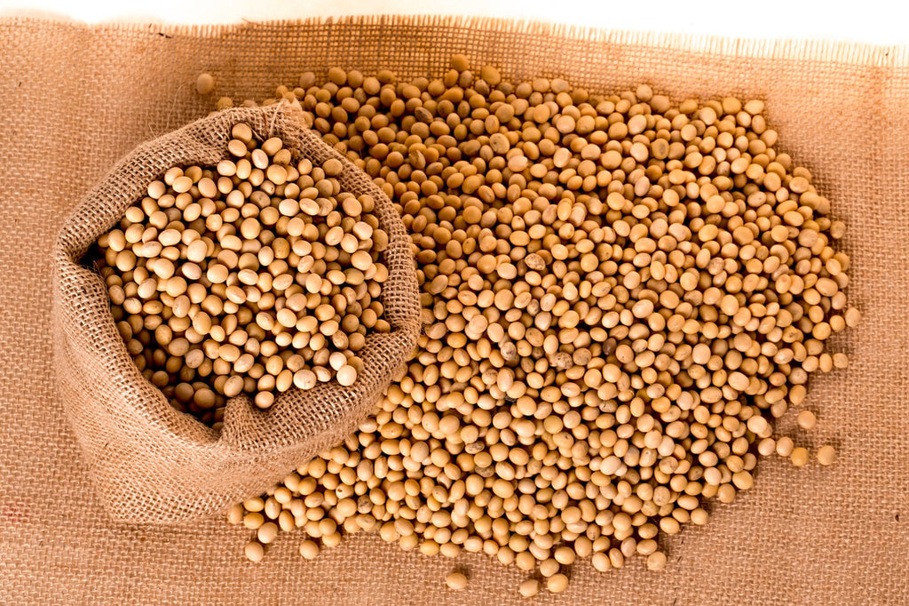 All About Soybeans