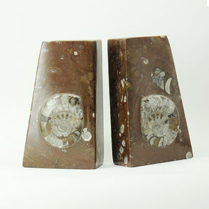 Fossil Bookends - Brown Ammonite