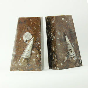 Fossil Bookends - Brown Orthoceras