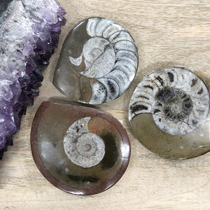 Ammonite Plaque 1pc