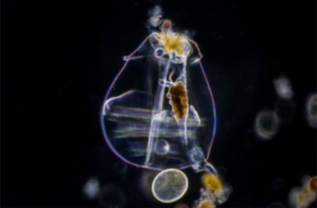 Rotifers: Delicious Spaceships of Nutrition