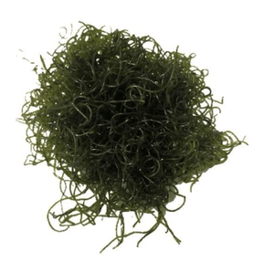 Chaeto Macro Algae with Pods | Pest Free |