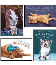 Fuzzy Friends - Scripture Greeting Cards - NIV - Boxed - Get Well