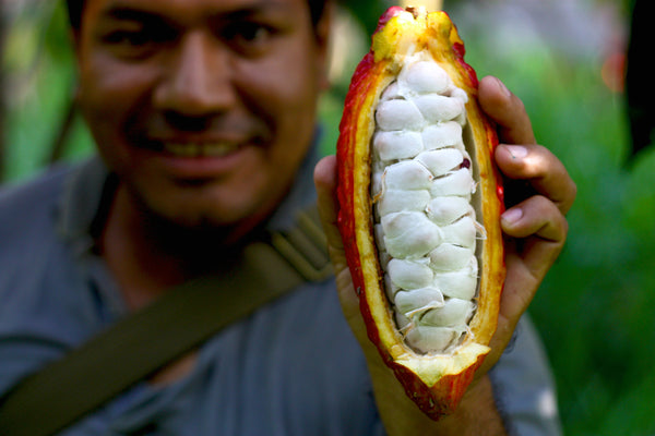 Ending the Status Quo in Cacao Sourcing