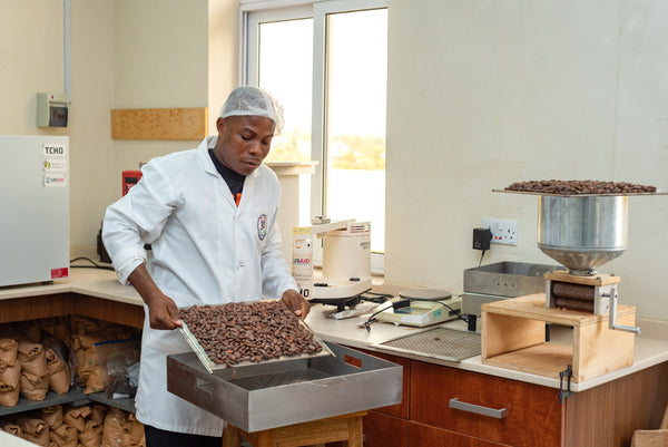 Cacao bean sorting in the TCHO Flavor Lab at CRIG
