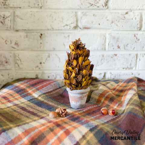 fall preserved boxwood topiary cone tree
