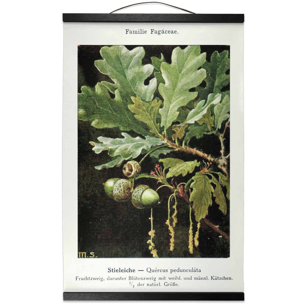 vintage oak leaf botanical hanging art