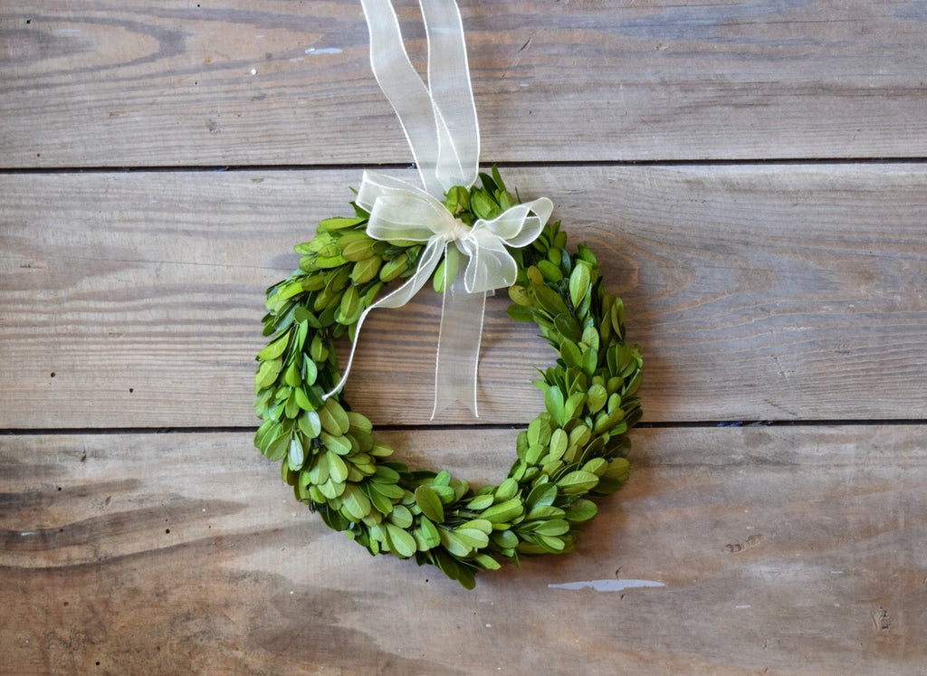 mini preserved boxwood wreath with ribbon