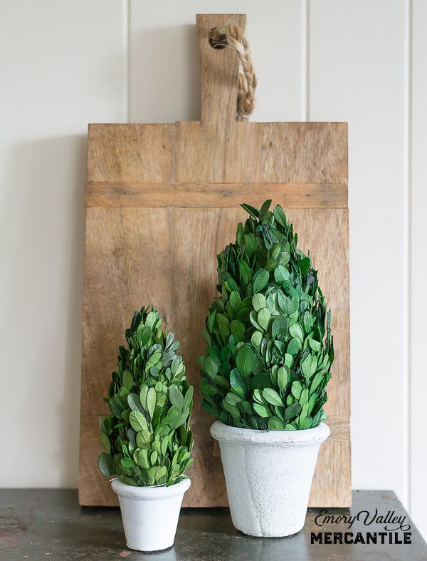 Preserved Boxwood Topiary Cone in Clay Pot, 2 sizes