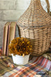 fall preserved boxwood topiary ball