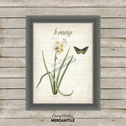 Vintage Narcissus Botanical Printable