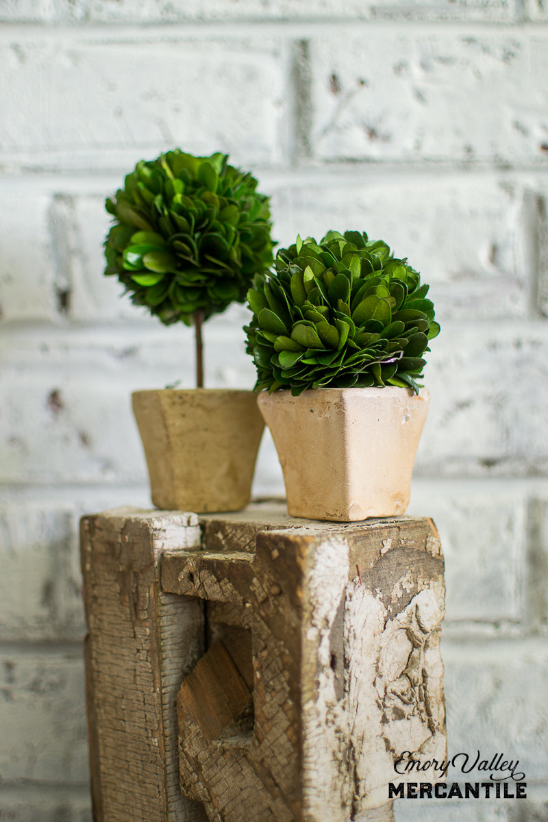mini boxwood topiary set