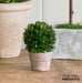 mini preserved boxwood topiary ball