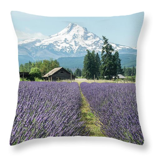 Oregon Lavender Fields - Throw Pillow