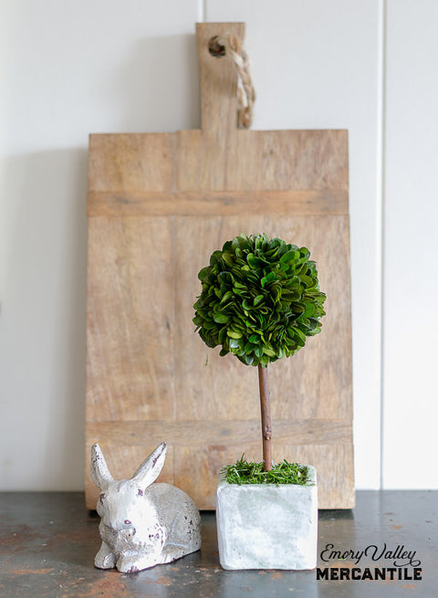 preserved boxwood ball topiary in square pot