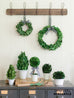 preserved boxwood wreaths and topiaries