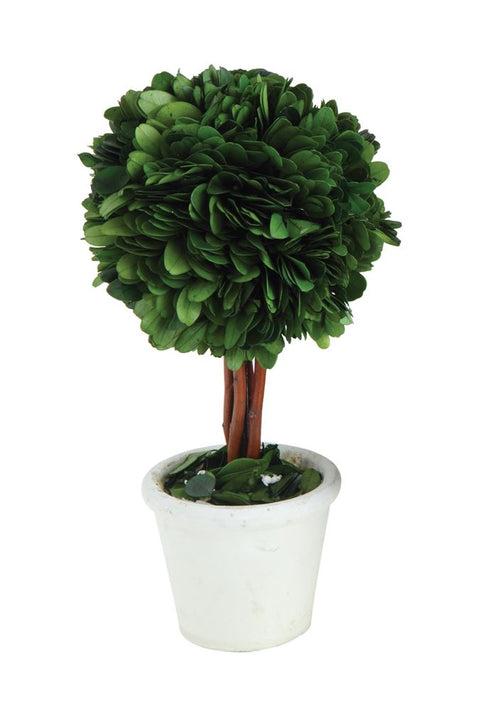 small round preserved boxwood topiary with stem