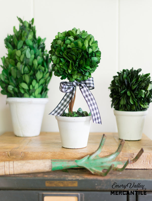 small preserved boxwood topiary ball tree