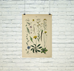 Vintage Botanical Illustration Matte Poster