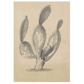 Prickly Pear 4 Art Print - KNUS