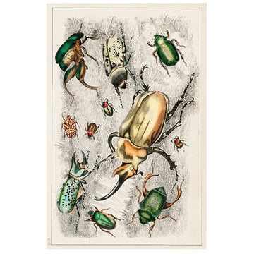 Beetle Collage 1 Art Print - KNUS