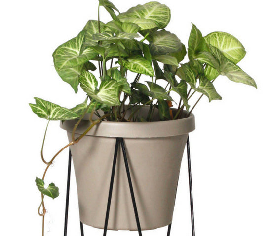 Hairpin Pot Plant Stands - White