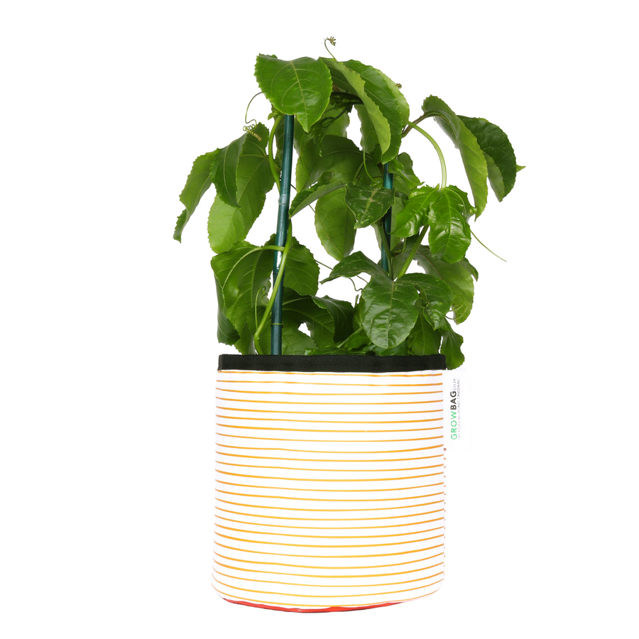 Orange Stripy planter Medium - KNUS
