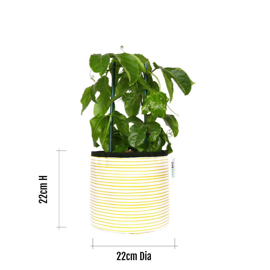 Yellow Stripy planter Medium - KNUS