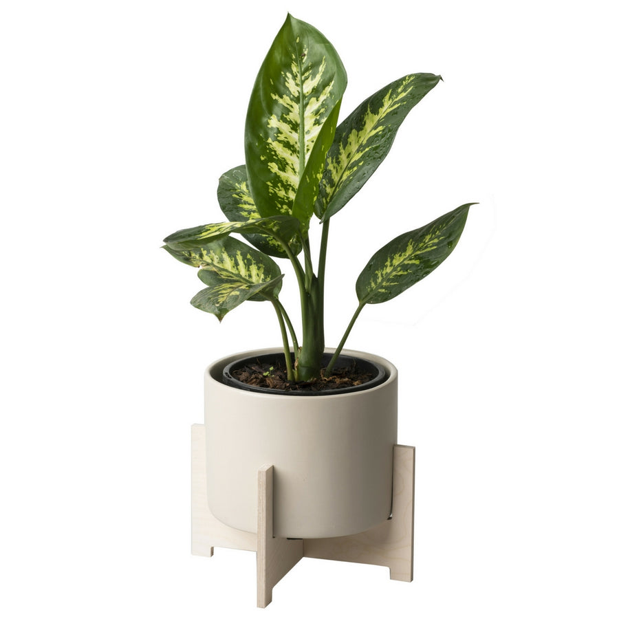 Cango Pot Plant Holder - KNUS