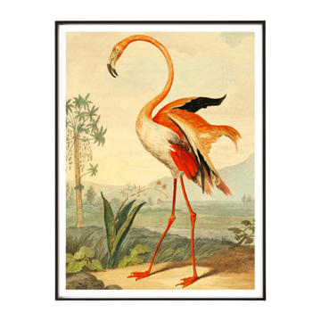 Flamingo Art Print - KNUS