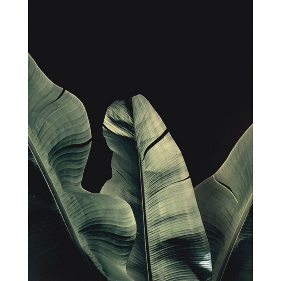 Banana Leaf Black Background Art Print - KNUS
