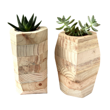 Large Wood Planter with Potted Succulent - KNUS