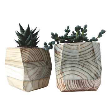 Medium Wood Planter with Potted Succulent - KNUS