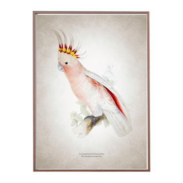 Leadbeater's Cockatoo Art Print - KNUS