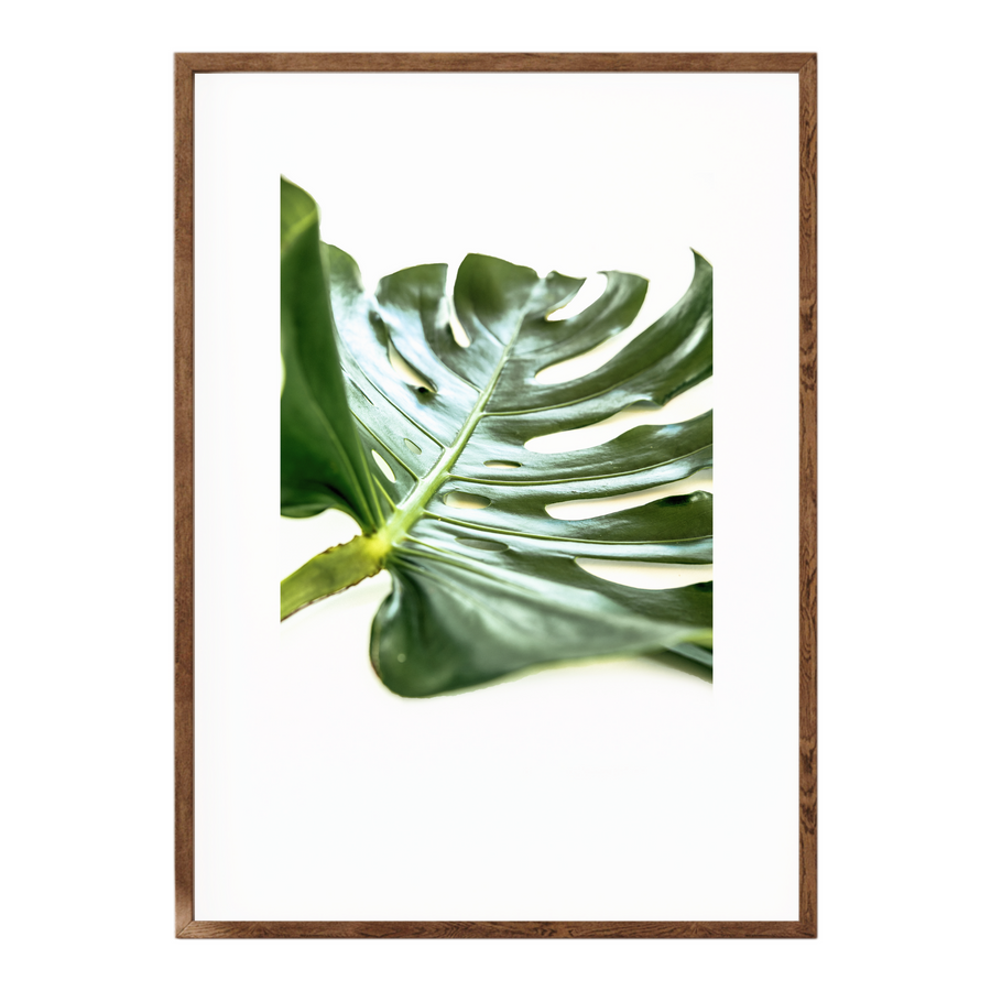 Delicious Monster Leaf IV Art Print - KNUS
