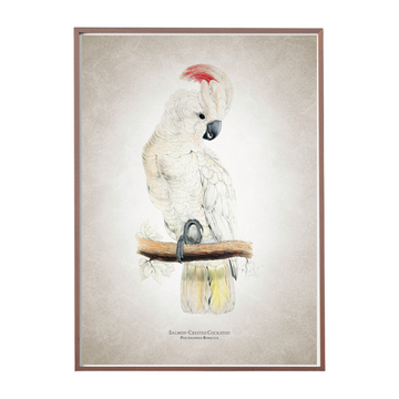 Salmon Crested Cockatoo Art Print - KNUS