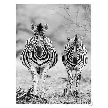 Striped Horse Front On Art Print - KNUS