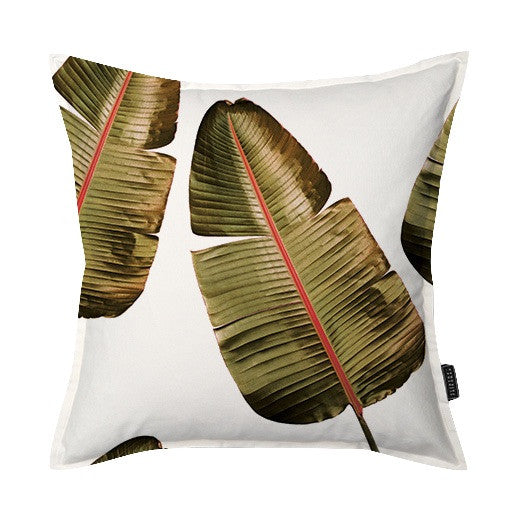 Wild Strelitzia ( pink vein) Scatter Cushion