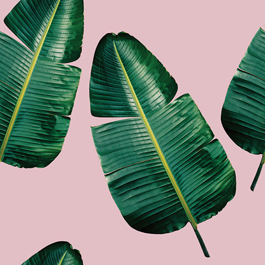 Banana Leaf Pink Wallpaper