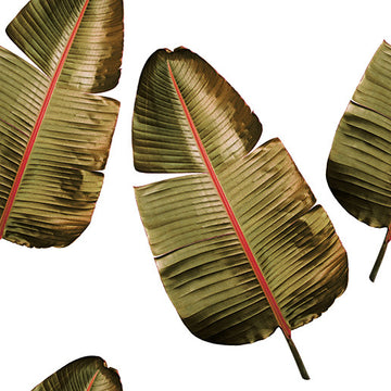 Banana Leaf White Wallpaper