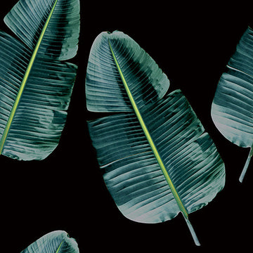 Banana Leaf Black Wallpaper