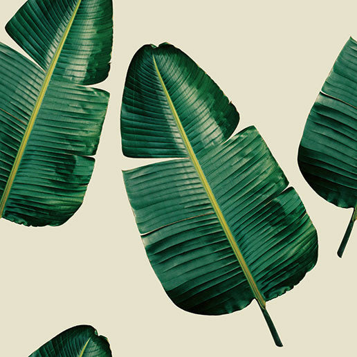 Banana Leaf (G&Y) Wallpaper