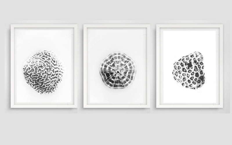 Shelled Urchin Art Print