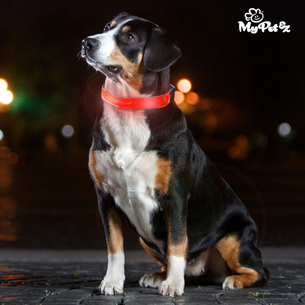 Collier LED pour Chiens My Pet EZ