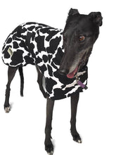 Autumn range Greyhound 'cowprint' coat in cotton & fleece washable