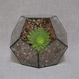 Terrariums Geometric Shaped - The MOJO