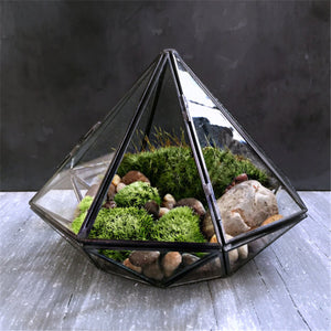 Terrarium Diamond Shaped - The MOJO