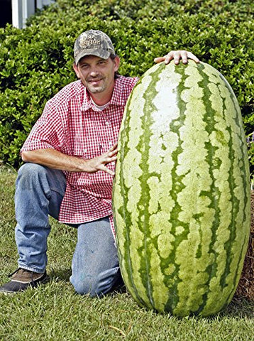 Want this Giant Watermelon in your back yard?